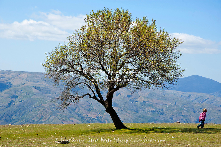 Little girl walking past a tree in springtime in the Alpujarras mountains, Andalusia, Spain.