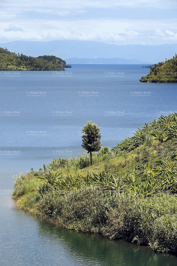 Rwanda. Western province. Kivu lake. View on the hills and a single tree.  © 2007 Didier Ruef