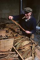 Europe/France/Midi-Pyrénées/46/Lot/Haut-Quercy/Env Salviac: Triage du tabac<br /> PHOTO D'ARCHIVES // ARCHIVAL IMAGES<br /> FRANCE 1980