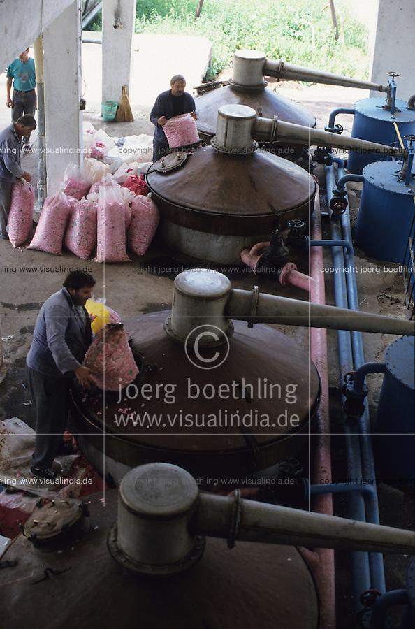 BULGARIA Kazanlak, damascena rose blossom in the rose valley , the rose blossom are distilled for essential oil and rose water which is used for cosmetics and perfume / BULGARIEN Kazanlak, Damscena Rose , aus den Rosenblaettern wird Rosenwasser und Rosenoel destilliert, die als Grundstoffe fuer Kosmetika und Parfuem verwendet wird - <br /> MORE PICTURES AVAILABLE!