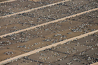 Cattle feedlot, southeastern Colorado. April 2013. 84760