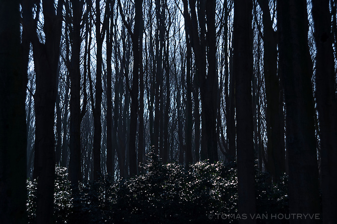 Trees are seen the forest of Kluisbergen, near Ronse on March 4, 2013. Belgium's language border runs through the middle of the forest.