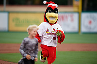 """The Palm Beach Cardinals mascot during a game against the Charlotte Stone Crabs on July 22, 2017 at Roger Dean Stadium in Palm Beach, Florida.  The Cardinals wore special """"Ugly Sweater"""" jerseys for Christmas in July.  Charlotte defeated Palm Beach 5-2.  (Mike Janes/Four Seam Images)"""