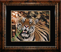 """Available in two sizes:<br /> <br /> Image Size:  11"""" x 14""""<br /> Finished Frame Dimensions:  21.5"""" x 24.5""""<br /> Quantity Available: 1<br /> <br /> Image Size:  16"""" x 20""""<br /> Finished Frame Dimensions:   27.5"""" x 31.5<br /> Quantity Available: 1"""
