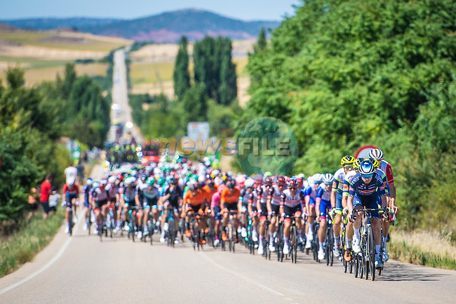 The peloton during Stage 4 of La Vuelta d'Espana 2021, running 163.9km from Burgo de Osma to Molina de Aragon, Spain. 17th August 2021.    <br /> Picture: Unipublic/Charly Lopez | Cyclefile<br /> <br /> All photos usage must carry mandatory copyright credit (© Cyclefile | Charly Lopez/Unipublic)