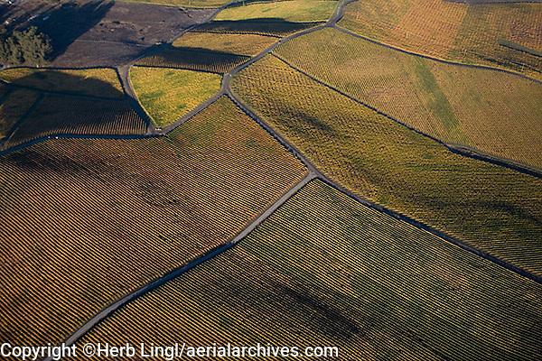 aerial photograph vineyards autumn Mayacamas Mountains Sonoma Valley Sonoma County, California