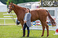 GBR-Kate Rocher-Smith presents SVS Dassett Enterprise during the First Horse Inspection for the CCI-L2* Section D.  2019 GBR-Saracen Horse Feeds Houghton International Horse Trial. Wednesday 22 May. Copyright Photo: Libby Law Photography
