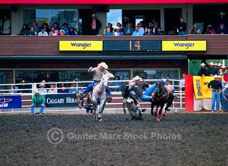 Rodeo Cowboys Steer Wrestling at Calgary Stampede, Calgary, Alberta, Canada - Editorial Use Only
