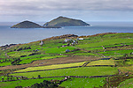 County Kerry, Ireland:<br /> A view of stone fences and fields on the Iveragh Peninsula with Scariff Island in the distace, from the Ring of Kerry