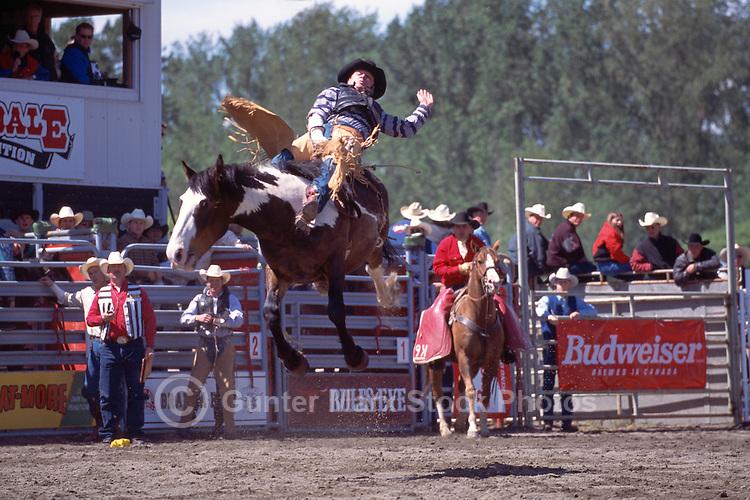 Surrey, BC, British Columbia, Canada - Cloverdale Rodeo, Bareback Riding, Cowboy Rider on Wild Horse
