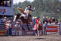 Surrey, BC, British Columbia, Canada - Cloverdale Rodeo, Bareback Riding, Cowboy Rider on Wild Horse