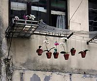 Hongkong, China, Asien, urbane Flora<br />  ***Keine Social_Media Nutzung***<br /> <br /> Engl.: Asia, China, Hong Kong, urban flora, plant, flowers, pts, window<br /> ***No social media use***