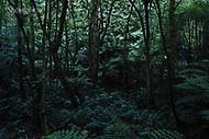 Image Ref: YR169<br /> Location: Wirrawilla Rainforest, Toolangi<br /> Date: 27.01.18
