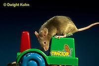 MU50-033x  Pet Mouse - exploring