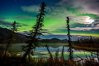 Aurora borealis (northern lights) over small taiga pond in the Brooks Range mountains, Arctic, Alaska.