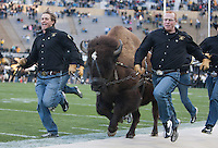 Colorado Mascot Ralphie V runs around the field before the game between California and Colorado at Folsom Field in Boulder, Colorado on November 16th, 2013.  Colorado defeated California, 41-24.