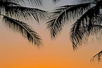 Silhouetted palm leaves with sunset colored sky