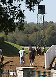 October 08, 2014:  Horses going back to the barn after the 4th race at Keeneland.  Candice Chavez/ESW/CSM