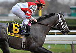 29 November 2008: Ramon Dominguez rides Old Fashioned past the grandstand the first time around on the way to an easy wire to wire victory in the grade 2 Remsen Stakes at Aqueduct Racetrack in Ozone Park, New York.