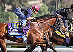 October 27, 2014: One Lucky Dane works in preparation for the Breeders' Cup Juvenile at Santa Anita Park in Arcadia, California on October 27, 2014. Zoe Metz/ESW/CSM