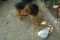 Cani abbandonati e ricoverati in un canile. Abandoned dogs that living in a kennel..