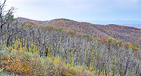 Fall foliage in Blue Ridge Mountains from the Shenandoah National Forest in Virginia. Photo/Andrew Shurtleff Photography, LLC