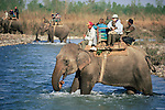 Tourists riding domestic Asian Elephants (Elephas maximus) and looking for tigers. Crossing the Karnali River, Royal Bardia National Park, Nepal.