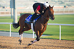 DUBAI,UNITED ARAB EMIRATES-MARCH 29: Ecnomic Model,trained by Chad Brown,exercises in preparation for the Godolphin Mile at Meydan Racecourse on March 29,2018 in Dubai,United Arab Emirates (Photo by Kaz Ishida/Eclipse Sportswire/Getty Images)