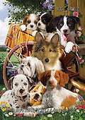 Interlitho,Simonetta,REALISTIC ANIMALS, REALISTISCHE TIERE, ANIMALES REALISTICOS, paintings+++++,young dogs,barrow,KL4462,#A# ,puzzles