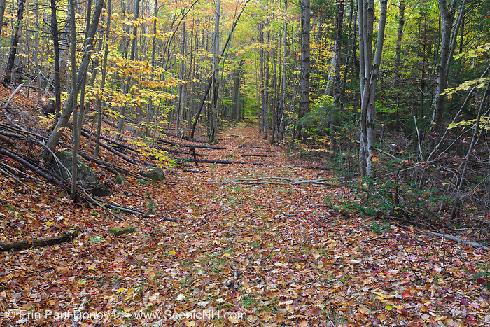 The old railroad bed of the abandoned Woodstock & Thornton Gore Railroad in the forest of Livermore, New Hampshire during the autumn months. Operated by the Woodstock Lumber Company, this was a logging railroad in operation from 1909-1914 in the towns of Woodstock, Thornton Gore, and Livermore