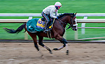 October 30, 2020: Tiz The Law, trained by trainer Barclay Tagg, exercises in preparation for the Breeders' Cup Classic at Keeneland Racetrack in Lexington, Kentucky on October 30, 2020. Scott Serio/Eclipse Sportswire/Breeders Cup/CSM