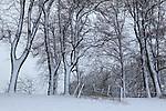 Europa, DEU, Deutschland, Nordrhein Westfalen, NRW, Rheinland, Niederrhein, Duesseldorf-Kaiserswerth, Schneebedeckte Baeume, Morgens nach Schneefall, Neuschnee, Baumreihe, Kategorien und Themen, Natur, Umwelt, Landschaft, Jahreszeiten, Stimmungen, Landschaftsfotografie, Landschaften, Landschaftsphoto, Landschaftsphotographie, Wetter, Wetterelemente, Wetterlage, Wetterkunde, Witterung, Witterungsbedingungen, Wettererscheinungen, Meteorologie, Wettervorhersage<br /> <br /> [Fuer die Nutzung gelten die jeweils gueltigen Allgemeinen Liefer-und Geschaeftsbedingungen. Nutzung nur gegen Verwendungsmeldung und Nachweis. Download der AGB unter http://www.image-box.com oder werden auf Anfrage zugesendet. Freigabe ist vorher erforderlich. Jede Nutzung des Fotos ist honorarpflichtig gemaess derzeit gueltiger MFM Liste - Kontakt, Uwe Schmid-Fotografie, Duisburg, Tel. (+49).2065.677997, <br /> archiv@image-box.com, www.image-box.com]