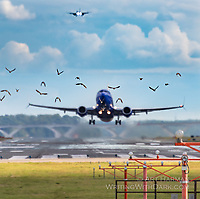 """""""Watching Birds Takeoff at DCA"""" (And planes too). By Art Harman. I think the birds just like to follow the planes ;)"""