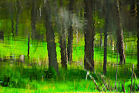 """""""MEADOW MIRAGE""""<br /> <br /> Kootenai forest reflections in Tooley Lake, Montana. Dark tree trunks reflecting on water set in green grass<br /> <br /> T ORIGINAL 24 X 36 GALLERY WRAPPED CANVAS SIGNED BY THE ARTIST $2,500. CONTACT FOR AVAILABILITY."""