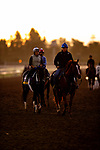 OCT 25: Breeders' Cup Distaff entrant Midnight Bisou, trained by Steven M. Asmussen, comes off the track with assistant trainer Scott Blasi, at Santa Anita Park in Arcadia, California on Oct 25, 2019. Evers/Eclipse Sportswire/Breeders' Cup