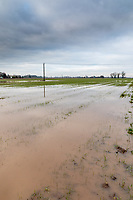 Flooded wheat field following heavy rain - Lincolnshire, January