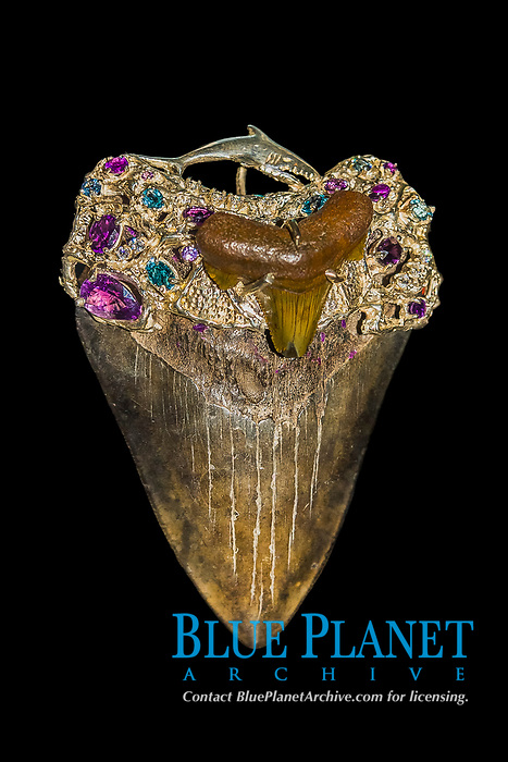 megalodon art - ornamented megalodon fossil tooth, with silver, amethyst, blue topaz, cubic zirconia, and megalodon fossil tooth, Carcharocles megalodon, 15.9 - 2.6 million years old, Neogene period