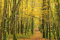 France, Allier (03), forêt de Tronçais, Saint-Bonnet-Tronçais, promenade en famille en automne // France, Allier, Tronçais forest, Saint Bonnet Troncais, family walk fall