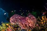 Rainbow reef with Sponges