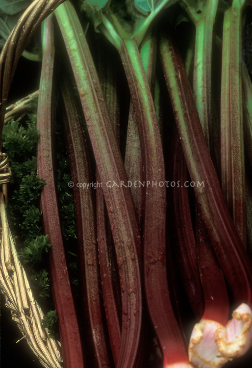 Harvested rhubarb variety Imperial Early in a basket showing red stems