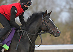 November 3, 2020: Jessica Morgan/Eclipse Sportswire/Breeders Cup: Kameko, trained by trainer Andrew M. Balding, exercises in preparation for the Breeders' Cup Mile at Keeneland Racetrack in Lexington, Kentucky on November 3, 2020.
