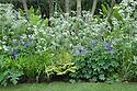 Wild flower border featuring cow parsley (Anthriscus sylvestris) and purple-blue geraniums beneath a row of hazels (Corylus avellana). Arthritis Research UK Garden, designed by Chris Beardshaw, RHS Chelsea Flower Show 2013.
