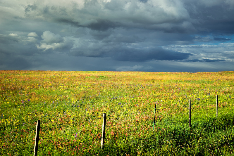Fence storm clouds, and wildflowers. Zumwaly Prairie Preserve, Oregon