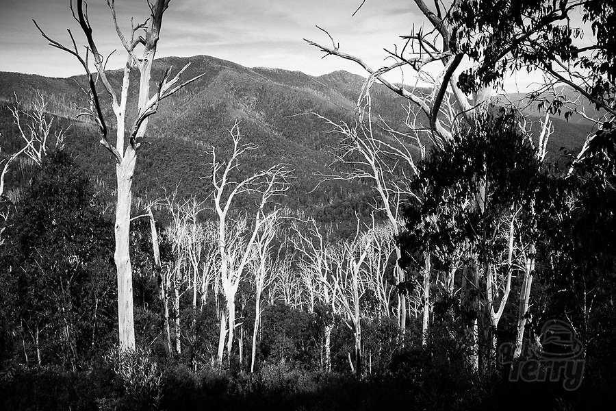 Image Ref: CA1247<br /> Location: Mt Buffalo National Park<br /> Date of Shot: 07.03.20