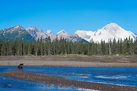 Alaska Salmon Run
