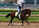 LOUISVILLE, KY -APR 25: Kentucky Derby hopeful Lone Sailor trains for the Kentucky Derby at Churchill Downs, Louisville, Kentucky. (Photo by Mary M. Meek/Eclipse Sportswire/Getty Images)