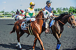 Niigon Express(13) with Jockey Gerry Olguin aboard at the 155th Queen's Plate at Woodbine Race Course in Toronto, Canada on July 06, 2014.