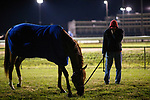 October 25, 2018 : Mind Your Biscuits grazes at Churchill Downs on October 25, 2018 in Louisville, Kentucky. Evers/ESW/CSM