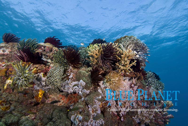 Coral reef, Mantanani Island, Malaysia.