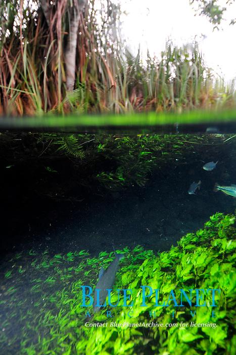 Split image of Baia Bonita river, Aquario Natural, Bonito, Mato Grosso do Sul, Brazil